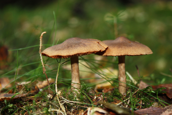 Funky Mushrooms