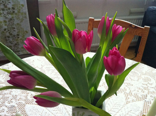 Happy Tulip Day in Sweden