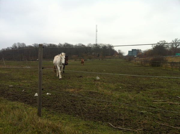 Horse Drama And Glove Stealing In Lyckeby