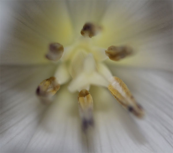 My Play Date With Tulips And A Macro Lens
