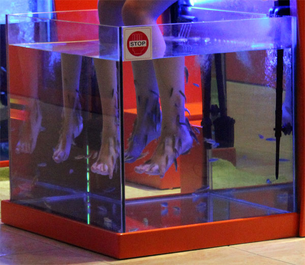 One Fish Pedicure Please