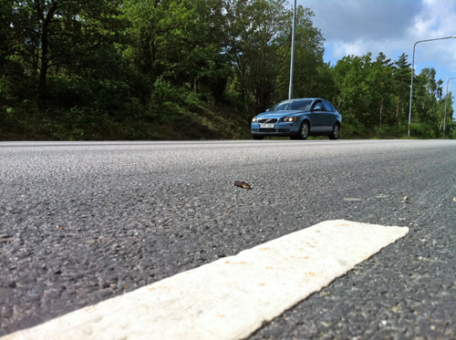 Take chances - Small insect crossing big road