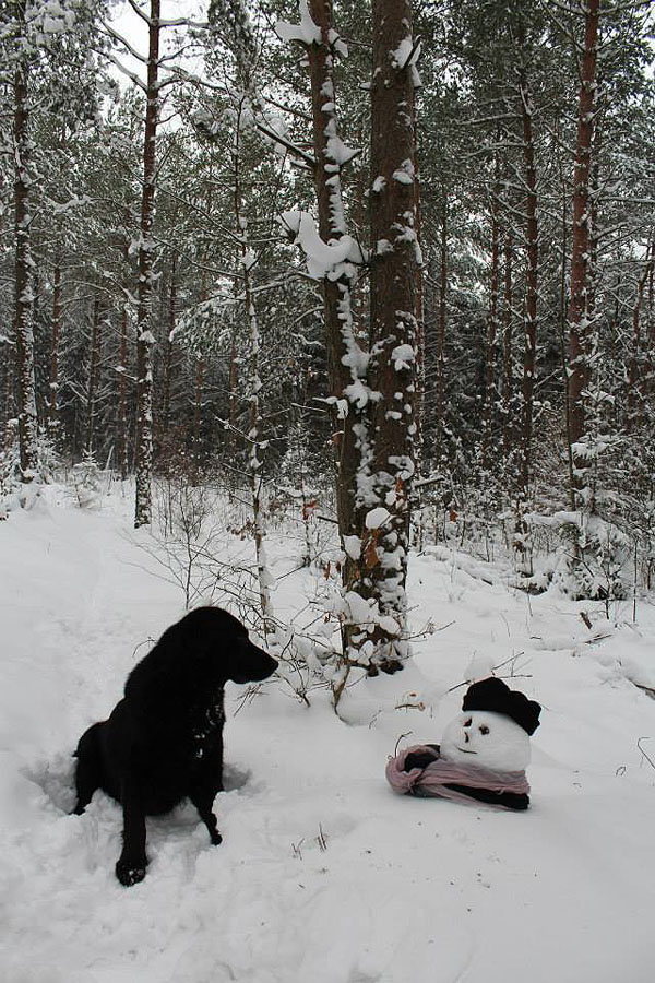 A Forest Escapade With A Snowman Experiment And Odd Snow Figures