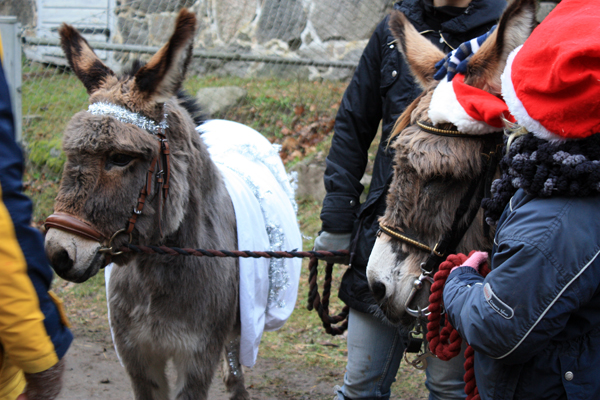Bubbetorps Christmas Market - Adorable Donkeys