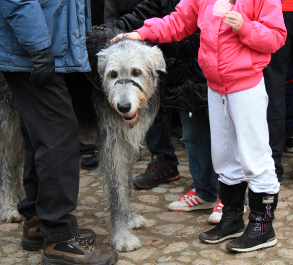 Bubbetorps Christmas Market - Beautiful Dog