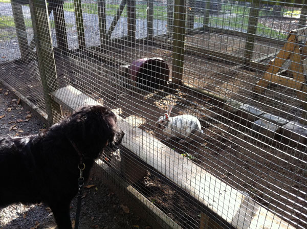 Doggy Meets Rabbit And Pig In The Wamo Park