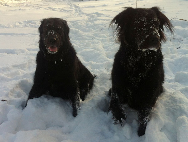 Happy Doggies Playing In The Snow