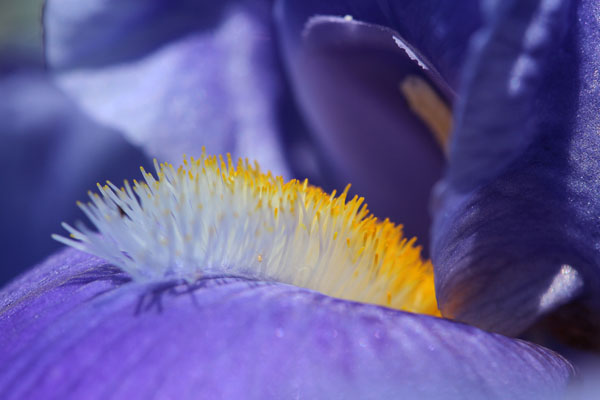 Iris Through A Macro Perspective